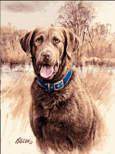 Chesapeake Bay Retriever Flags