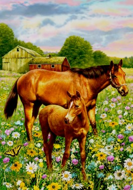 Horses on the farm