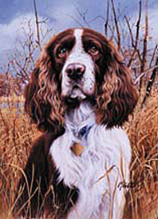 Springer Spaniel Flags