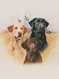 Tri Labradors Flags