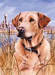 Yellow Lab Flags